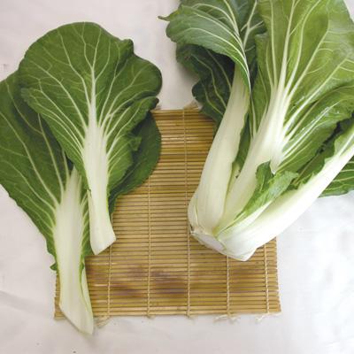 Cải Bẹ /Pak Choi White Stem (Bok Choi) (Túi 250 hạt)