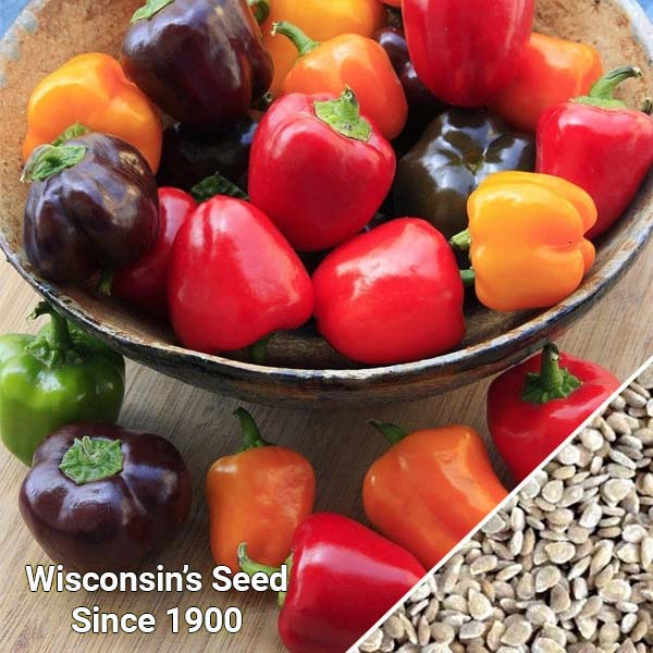 Ớt Ngọt Sweet Pepper - Mini Bell Blend (Túi 30 Hạt)