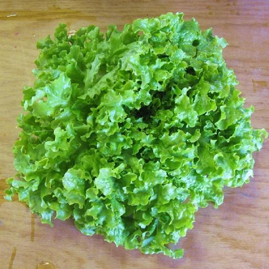 Xà Lách Bowl Green (Túi 250 Hạt)