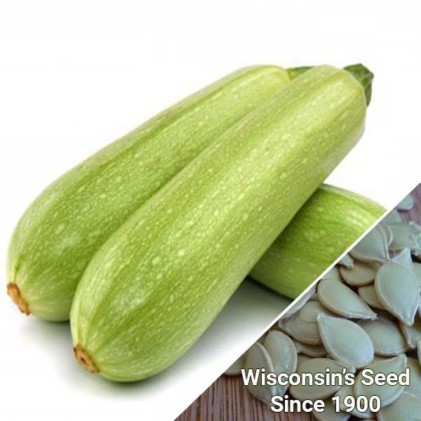 Bí Ngòi Grey Zucchini (Túi 20 Hạt)